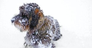 It's Officially Illegal In VA To Leave A Dog Chained Out In The Cold