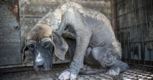 South Korea's President Plans To Ban Dog Meat Consumption
