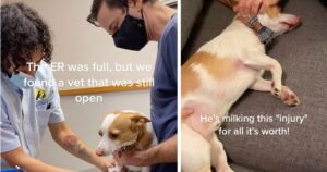 Relatable Dog Really Milks His Tiny Cut For Attention